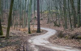 Zakaz wstępu do lasów do 11 kwietnia