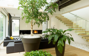 Duże rośliny doniczkowe: które wybrać do domu?