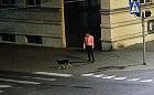 Zabrała czyjegoś psa spod sklepu. Złapała ją straż miejska