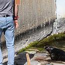 W Gdyni zadbają o spokój fok
