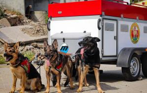 Wesprzyj zbiórkę na wóz dla psich ratowników