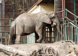 Od wtorku zoo znowu będzie otwarte