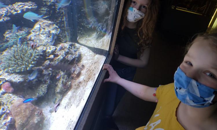 Akwarium Gdyńskie ponownie otwarte