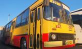 Gdynia: zabytkowy autobus Ikarus na linii 125, która kończy 60 lat