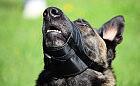 Pies chłodzi się pyskiem - nie krępuj go kagańcem