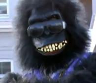 Goryl z Kongo w galerii sztuki