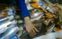 Żywe ryby sprzedawane z lodu. Dusiły się na oczach kupujących