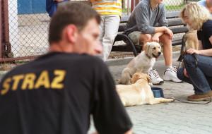 Jak zostać przewodnikiem psa ratowniczego?