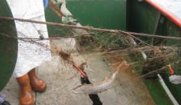 WWF wyławia sieci z Bałtyku. Naukowcy: pod publikę