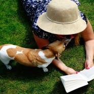 Posłuchaj piesku! Dzieci czytają. Psiaki słuchają.