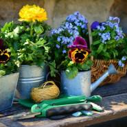 Warsztaty ogrodnicze