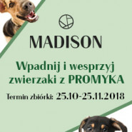 Wspieramy zwierzaki z Promyka