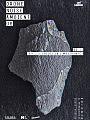 DNA 06