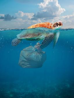 Zakończmy epokę śmiecenia. Zero waste