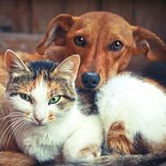 Medytacja dla Zwierząt