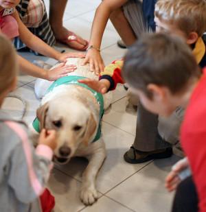 Psi terapeuta musi byćodpowiednio wyszkolony, lubićkontakt z dziećmi i mieć wyjątkowo spokojne usposobienie.