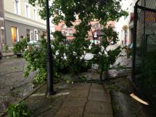 Połamane gałęzie przy Hali Targowej w Gdańsku.