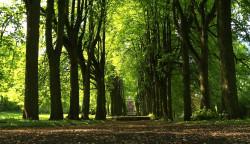 Aleja drzew na terenie byłego cmentarza krematoryjnego.