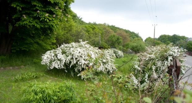 Wiosną działki, zarośnięte trawą i roślinnością, nie budzą odrazy.