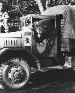 Miś doczekał się uznania już za życia. Jego podobizna stała się emblematem 22 Kompanii Zaopatrywania Artylerii, przemianowanej w 1944 r. na 22 Kompanię Transportową.