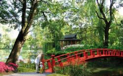 Tak ma wyglądać ogród japoński w Parku Oliwskim.