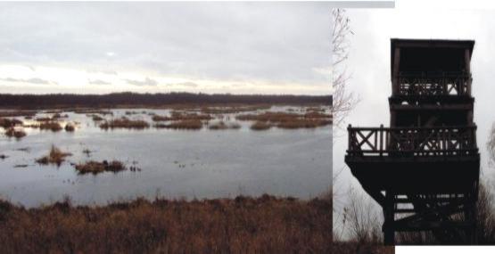 przepiękne widoki na jezioro Drużno z wieży widokowej nieopodal miejscowości Żółwiniec