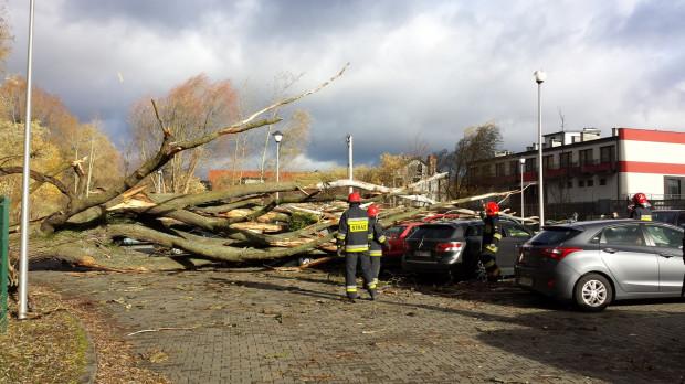 Podczas niedzielnej wichury konary drzew zmiażdżyły sześć aut zaparkowanych przy ul. Myśliwskiej w Gdańsku. Na szczęście, w pobliżu nie przebywał wtedy żaden z kierowców.
