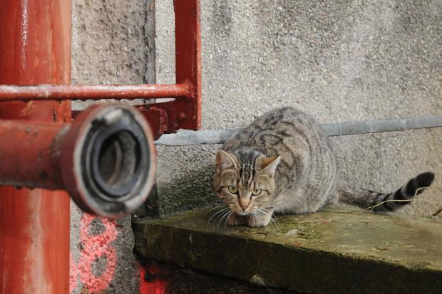 Półdzikie koty są nie tylko na naszych podwórkach, tysiące z nich bytuje na terenach stoczni czy ogródków działkowych.