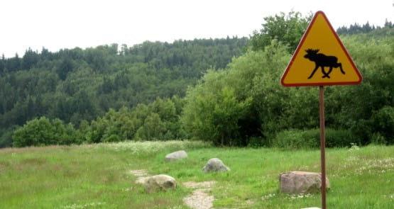 Takie znaki drogowe spotkać można nie tylko w Skandynawii ale i na Kaszubach ;)