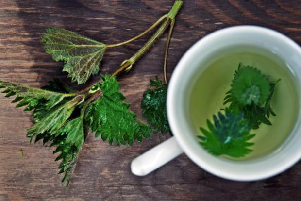 Herbata z pokrzywy to sprawdzony sposób na piękną cerę, zdrowe włosy i mocne paznokcie, ale ma także wiele innych dobroczynnych właściwości.