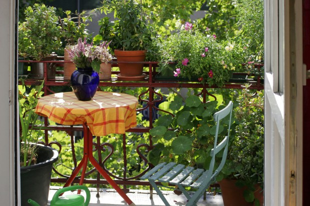 Balkony I Tarasy Dobierz Rośliny Do Swojego Trybu życia