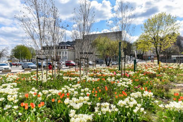 Wiosenną porą to gdyńskie kwietniki najbardziej cieszą oczy w całym Trójmieście.