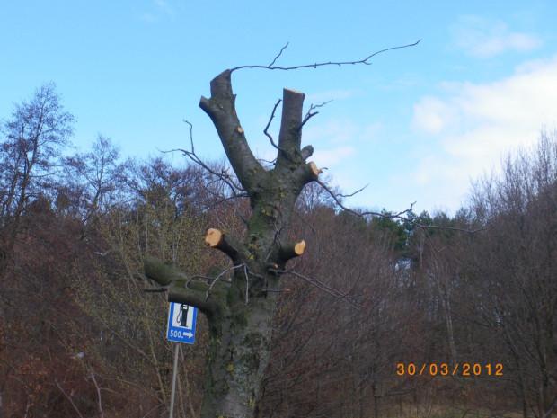 Warto pamiętać, że od ubiegłego roku karę można dostać także za niewłaściwie prowadzoną pielęgnację koron drzew. Usunięcie powyżej 30 proc. korony podlega karze za uszkodzenie drzewa w wysokości 60 proc. opłaty za usunięcie drzewa, a powyżej 50 proc. korony jest uznawane za zniszczenie drzewa, za co kara wyniesie dwukrotność opłaty.
