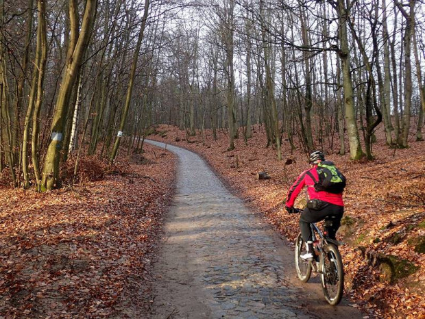 Mężczyzna na rowerze to - według badań - najczęstszy gość w lasach Trójmiejskiego Parku Krajobrazowego.