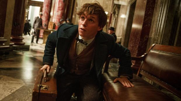 """Newt Scamander (Eddie Redmayne) to z pewnością nie Harry Potter. Postaci sporo jeszcze brakuje, by zdetronizować ulubieńca tłumów. Pamiętajmy jednak, że """"Fantastyczne zwierzęta ..."""" to dopiero pierwszy z pięciu planowanych filmów o przygodach maga, na którego dokonaniach bazował najbardziej znany bohater spod pióra J.K. Rowling."""