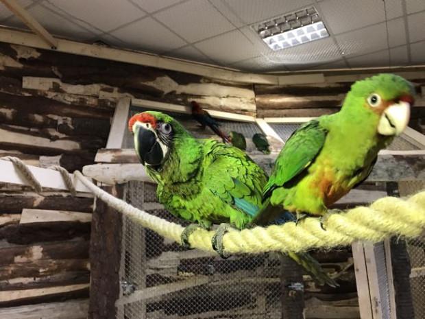 W gdańskiej papugarni można zobaczyć m.in. kakadu, popularne ary, rzadko spotykanego tukana i inne egzotyczne gatunki ptaków.