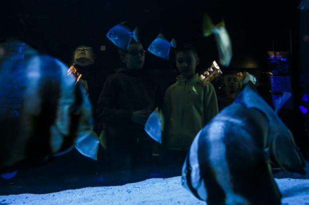 Akwarium Gdyńskie w 2016 r. odwiedziło ponad 40 tys. więcej osób niż rok wcześniej.