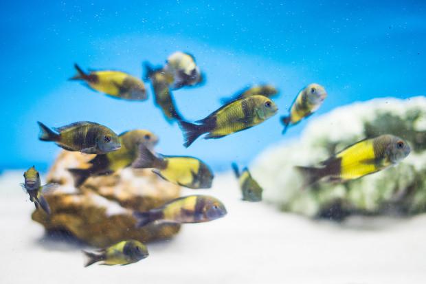 Nowoczesne Akwaria Egzotyczne Podwodne światy
