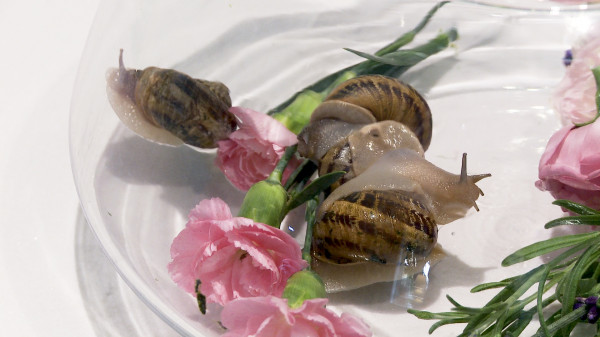 Masaż skóry żywymi ślimakami, które pełzając po twarzy, dekolcie i szyi mają przekazywać jej dobroczynne składniki odżywcze, a tym samym rewitalizować i odmładzać.