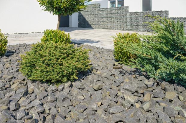 Ogrodowe Aranzacje Jak Wykorzystac Zwir I Dekoracyjny Kamien