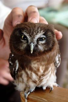 Jedną z sobotnich atrakcji będą opowieści o średniowiecznym myślistwie ptaszym.