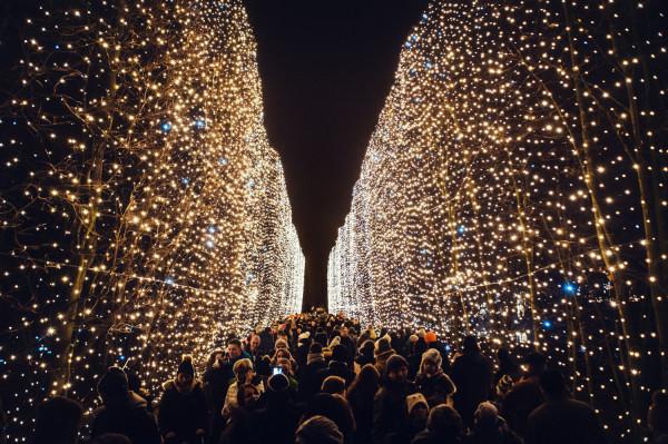 Tak w zeszłym roku wyglądał szpaler światła w parku Oliwskim, w tym też będzie, ale ma powstać na niezależnej konstrukcji.