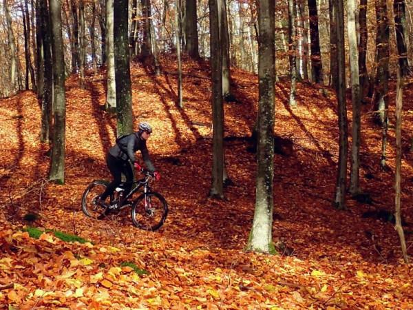 Obecny przebieg głównego szlaku rowerowego Trójmiejskiego Parku Krajobrazowego bardziej kluczy wśród ciekawostek krajoznawczych lasu niż umożliwia dogodny przejazd między dzielnicami i osiedlami Trójmiasta.