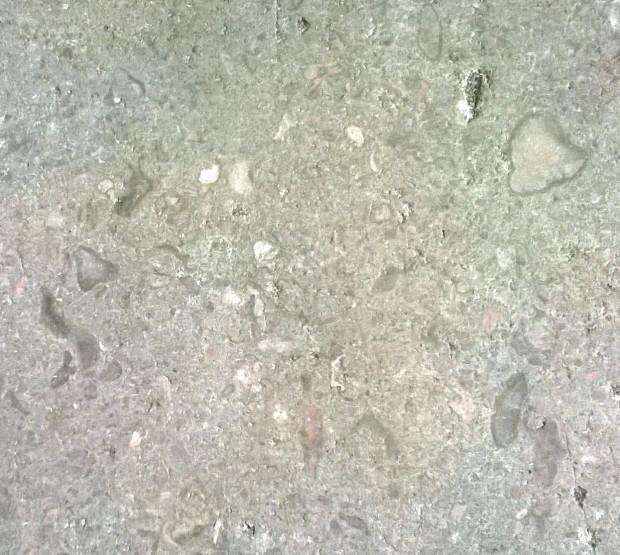 Bazylika Mariacka. Owalne i nieregularne kształty to skamieniałości gąbek.