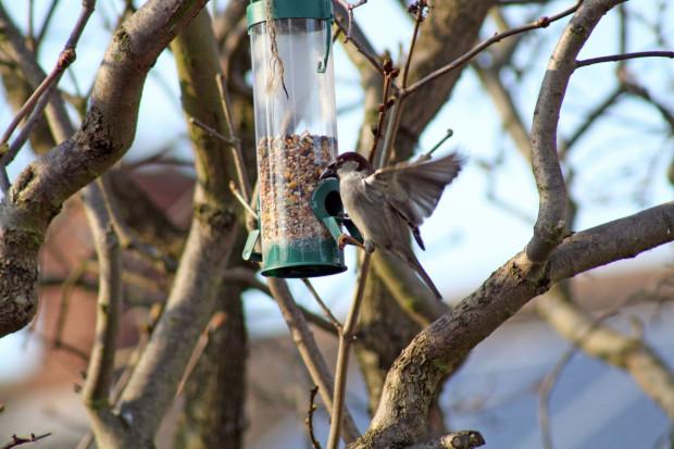Jeśli będziemy dokarmiać ptaki zimą, a latem wystawiać im wodę, to zapamiętają one, że w naszym ogrodzie zawsze znajdą coś dobrego.
