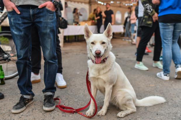 Czy suchy nos oznacza problemy zdrowotne, a psia ślina ma właściwości lecznicze? Obalamy najpopularniejsze mity na temat psów.