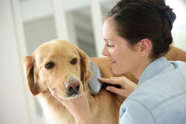 Zawołaj psa do siebie, w jednej dłoni trzymaj jego ulubione smakołyki, a w drugiej szczotkę. Pokaż ją psu i podawaj przysmaki w tym samym czasie.