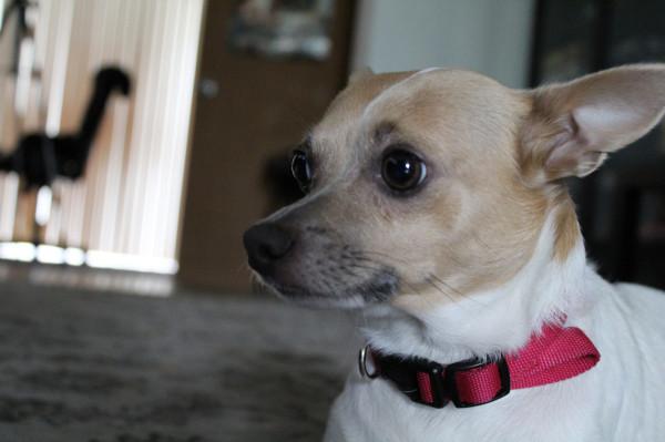 Czasem wystarczy spokojna rozmowa z właścicielami psiaka - być może nawet nie wiedzą, że zwierzak zachowuje się głośno podczas ich nieobecności.