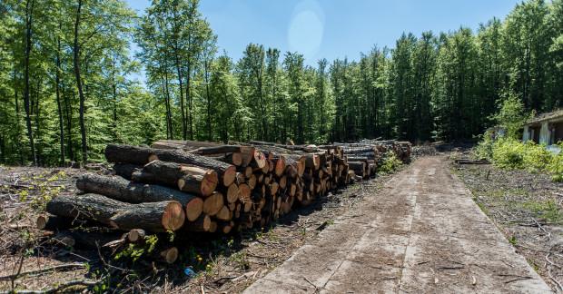 Mieszkańcom coraz częściej nie podoba się, że drzewa muszą ustępować miejsca deweloperom.