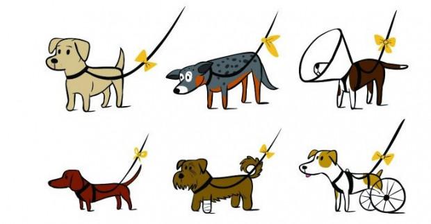 Żółta wstążka ma sygnalizować, że pies potrzebuje więcej przestrzeni i swobody.